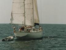 AYC - Ketch Mauric 16 m